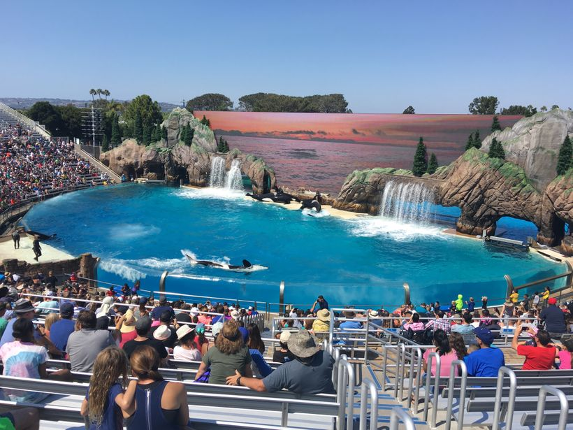 "Sitting in the ""splash"" zone in the endless sun at Sea World, in sunny San Digeo, Calif."