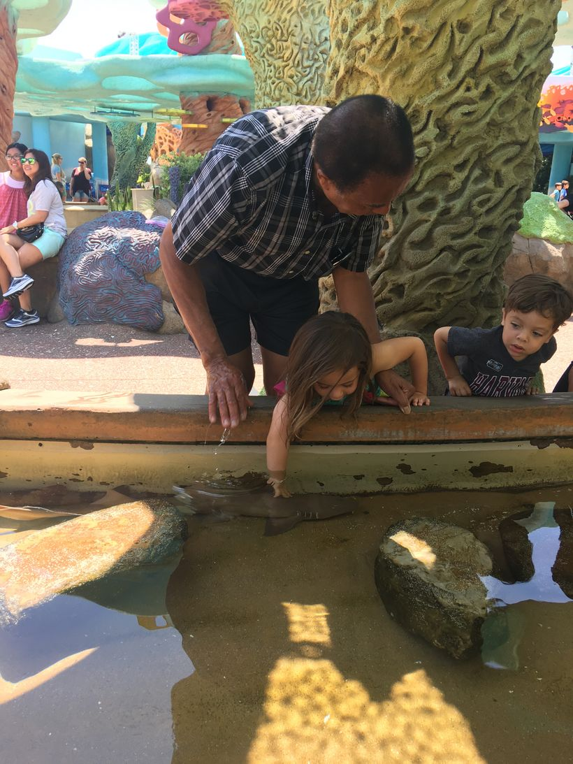 London and Miles enjoying the touch tank and petting a shark at SeaWorld with grandpa.