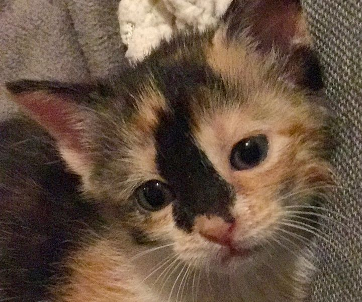 One of the many foster kittens that spent formative time with the Acro-Cats.