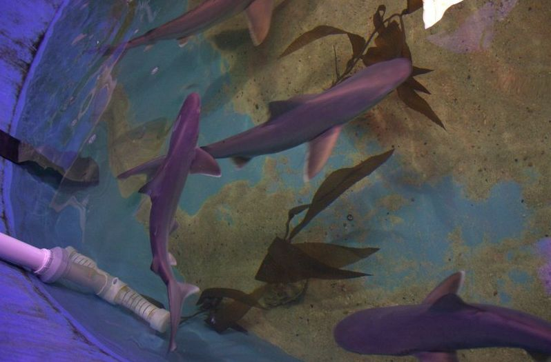 Sharks are seen swimming around in a pool found in a New York basement last month
