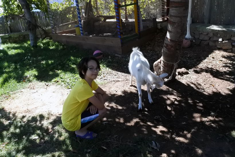 My son playing with a baby goat at Taverna Aravanes.