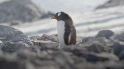 Antarctica: This Is What It's Like To Live On The Most Isolated Place On