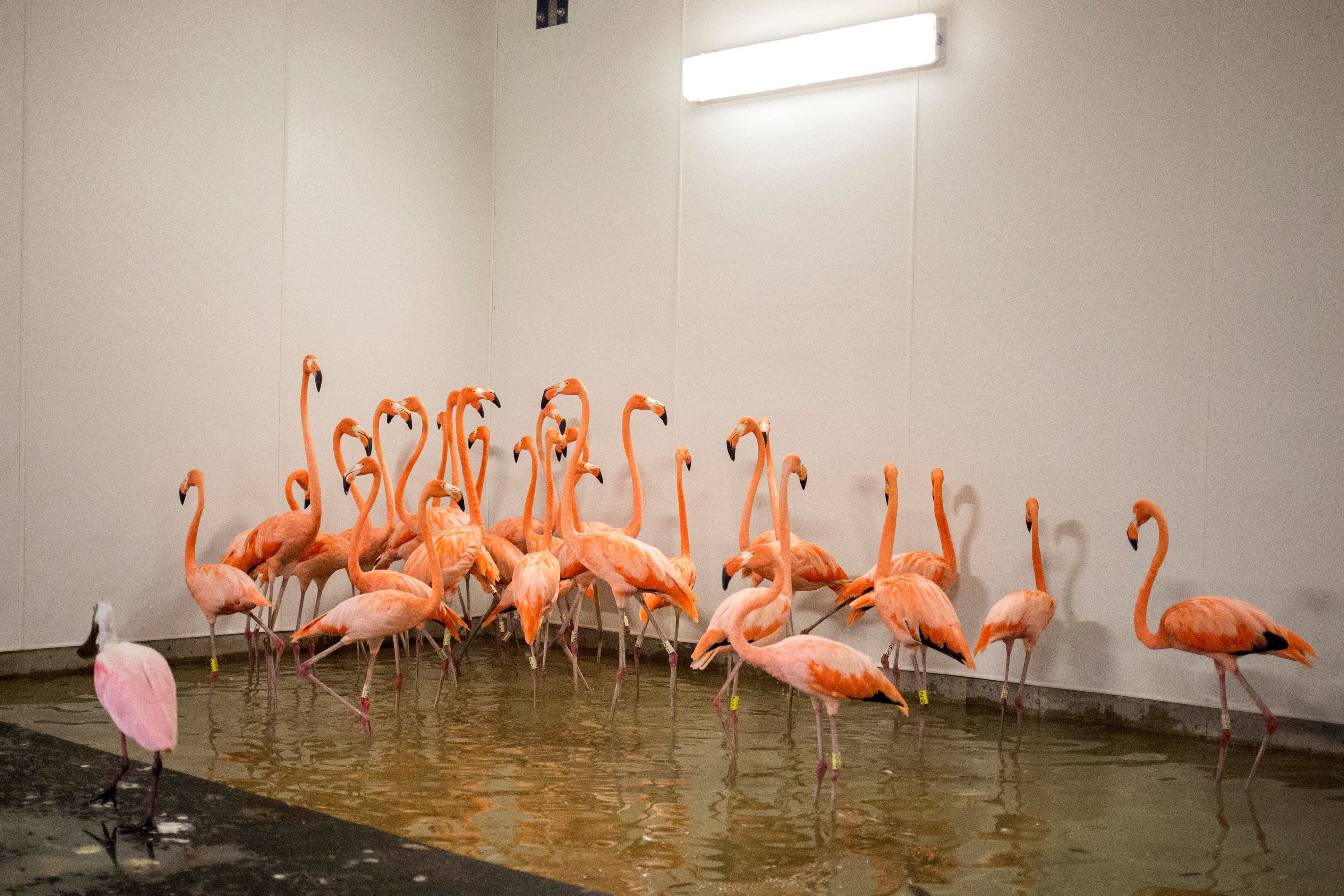 See How Miami's Biggest Zoo Is Preparing For Hurricane