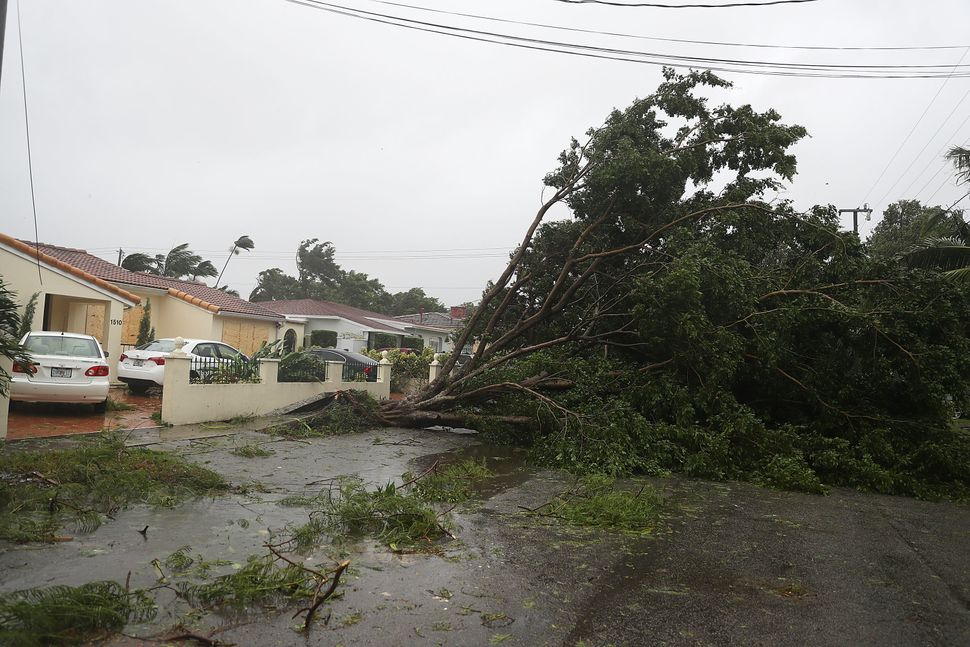 Trees and branches in Miami are knocked down.
