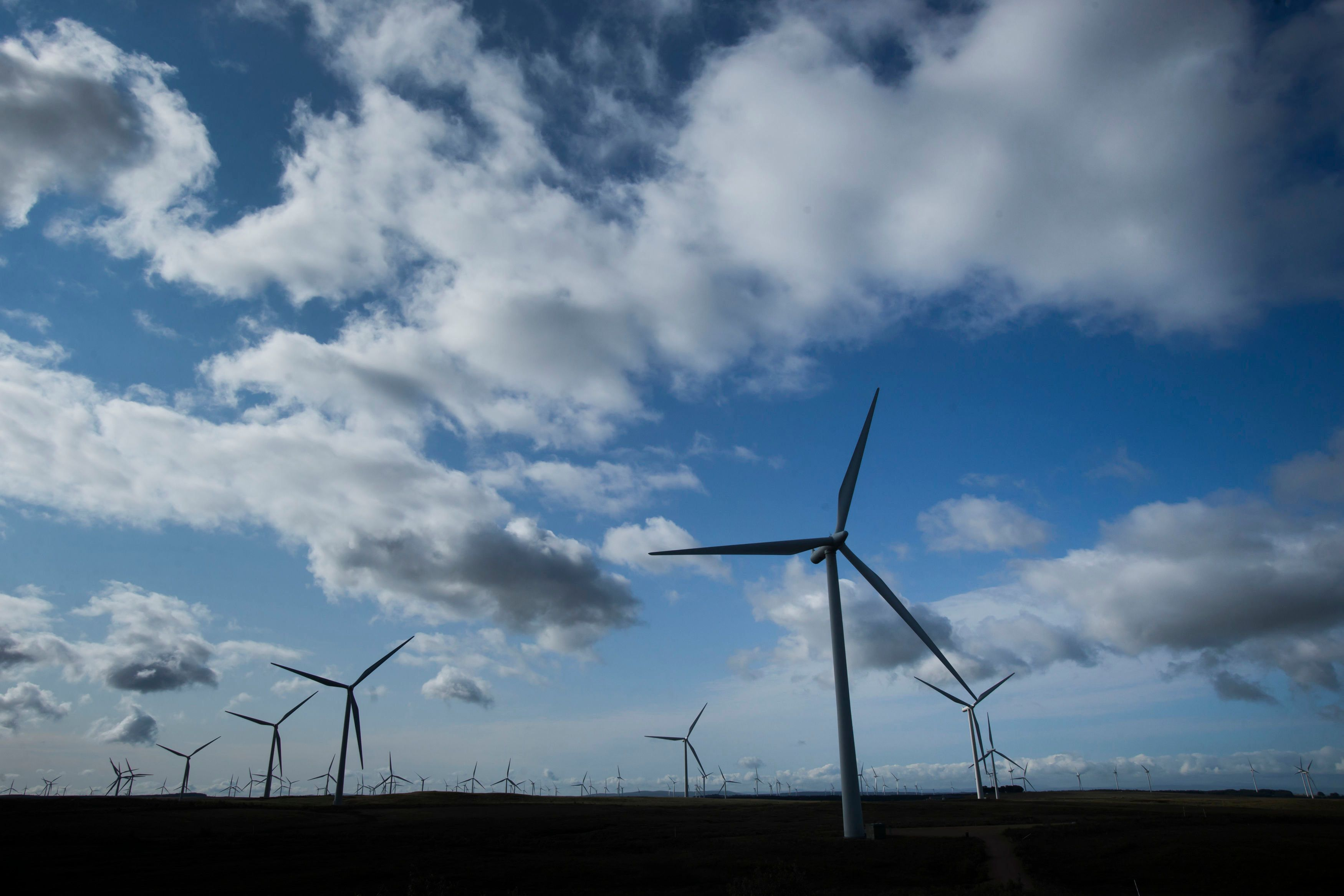 Renewable energy projects win clean power auction
