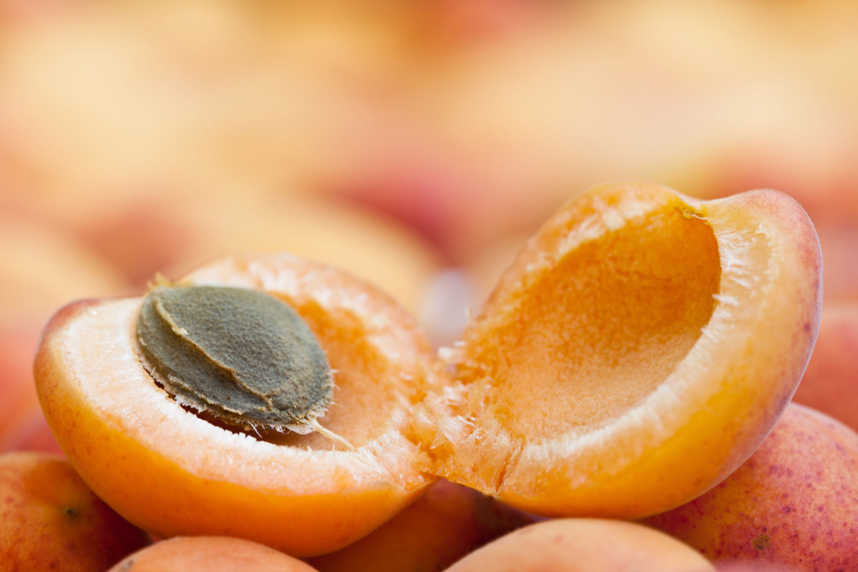 Beware that natural medicine: Australian man poisoned by apricot extract