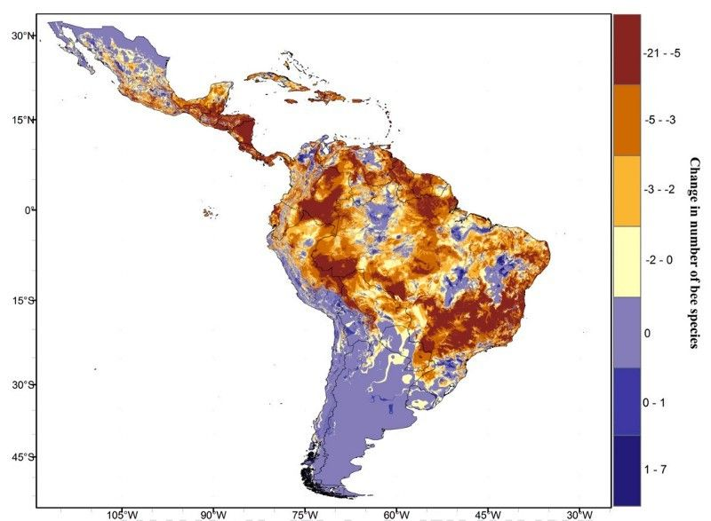 The projected change in the number of bee species across Latin America by 2050