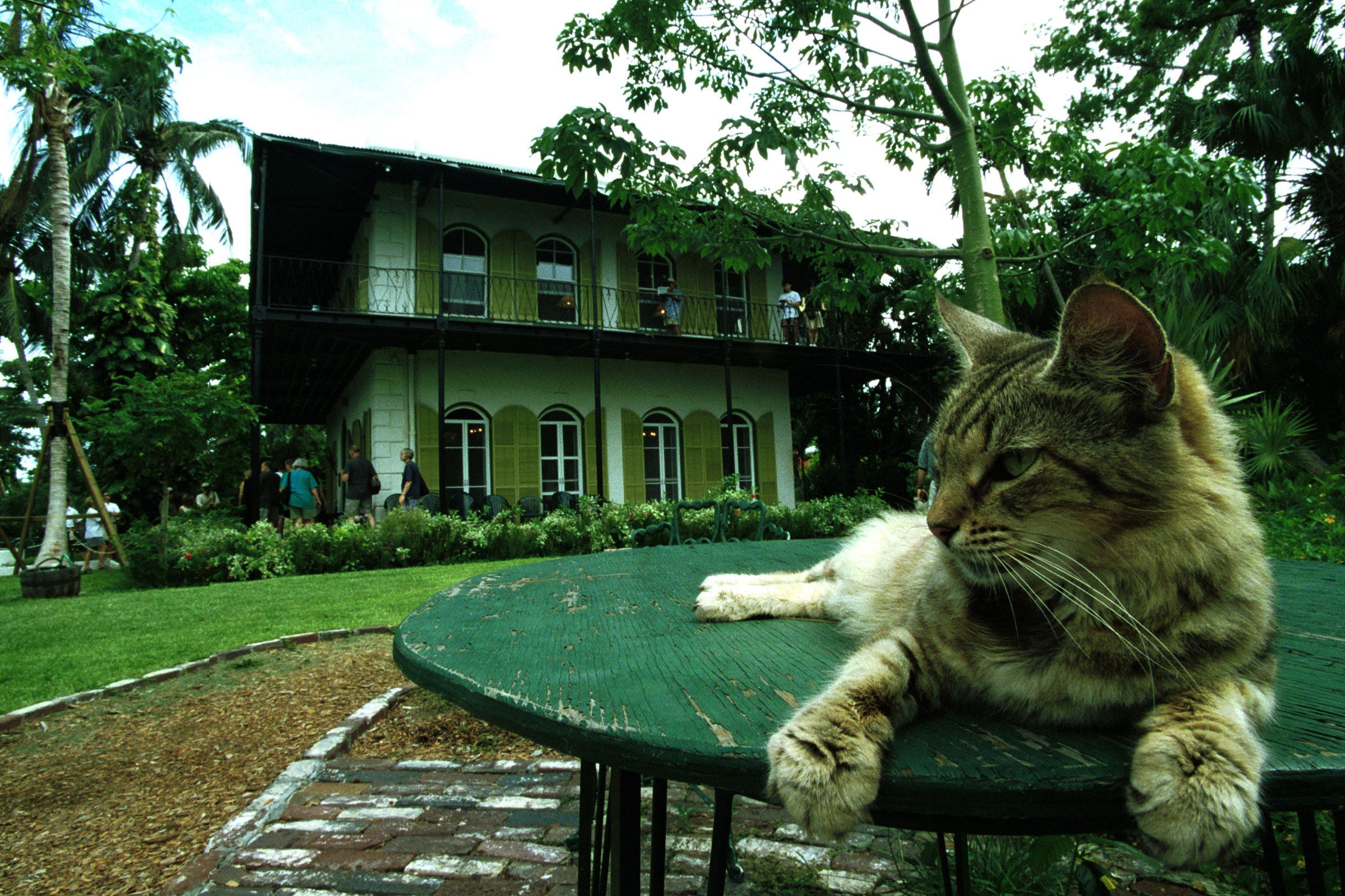 374412 02: A cat rests on a table in the garden of American author Ernest Hemingway''s home June 15, 1999 in Key West, Florida. (Photo by Georges De Keerle/Liaison)