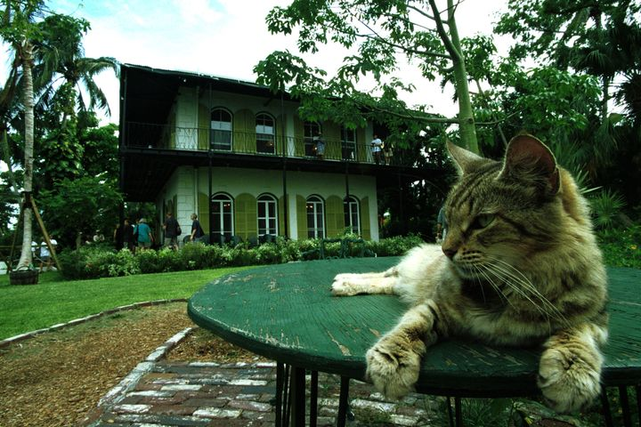A cat rests on a table in the garden of author Ernest Hemingway's onetime home.