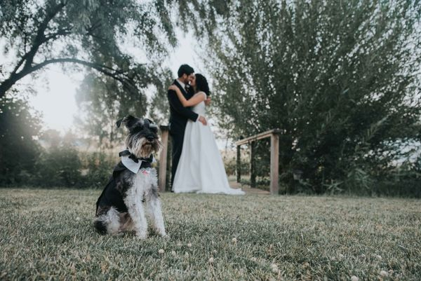 """Mackenzie and Lance married in front of all their friends and family in Huntley, Montana on Sept. 2. Charlie, their miniatur"
