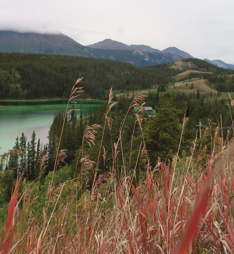 A stop at Emerald Lake to view the blazing Fireweed, the official floral emblem of the Yukon Territory