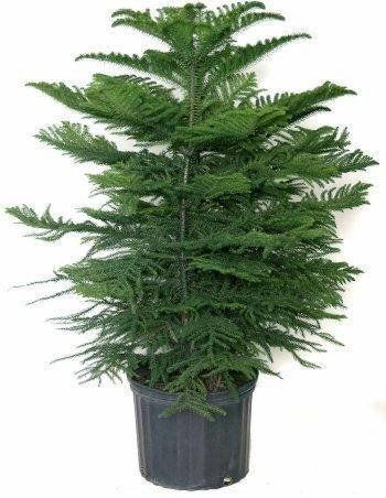 "Spruce up your home with a small, indoor evergreen, the perfect festive greenery for a cabin feel. <a href=""https://www.etsy."