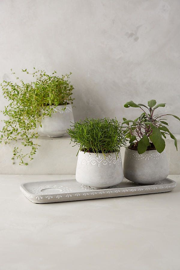"Plants add a lively feel to a smaller space. Accessorize your bathroom with some greenery, like this <a href=""https://www.ant"