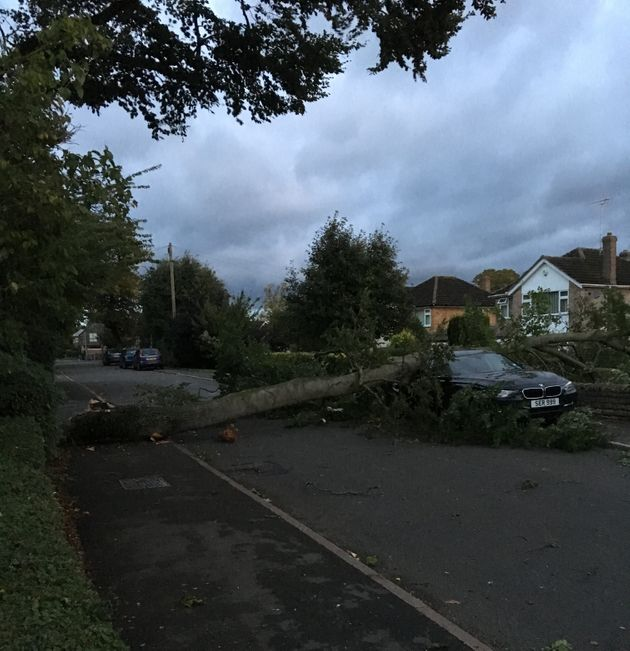 Jack Chisholm found a tree on top of a car this morning in Stamford,