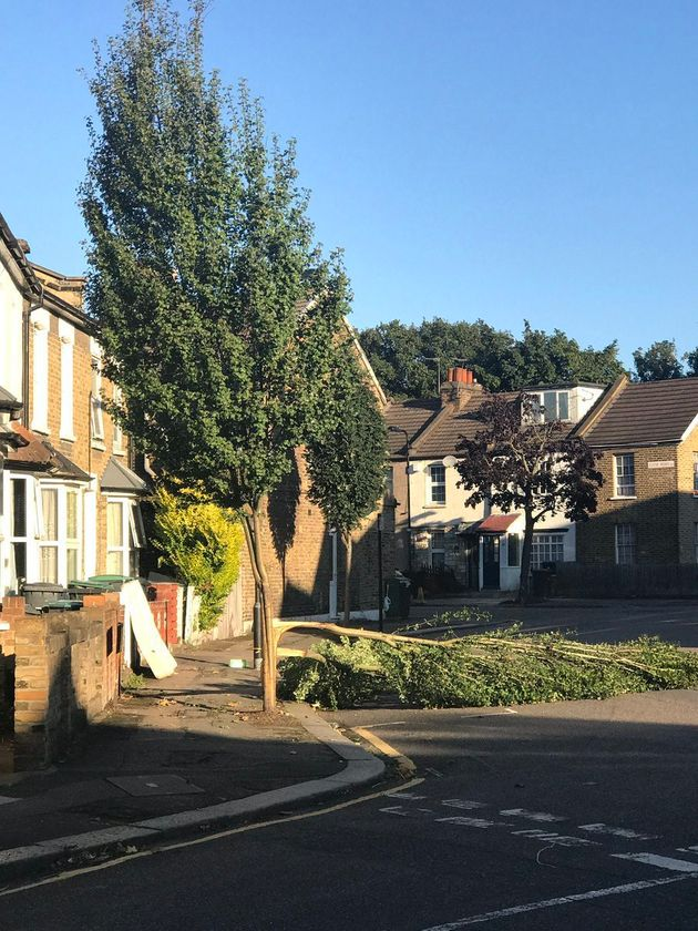 Trees had fallen in urban areas like Tottenham, north