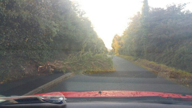 Storm Aileen also felled trees in the Republic of