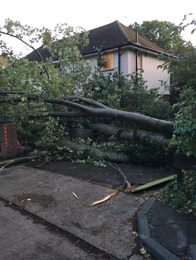 Alison Stammers said a fallen tree narrowly missed her
