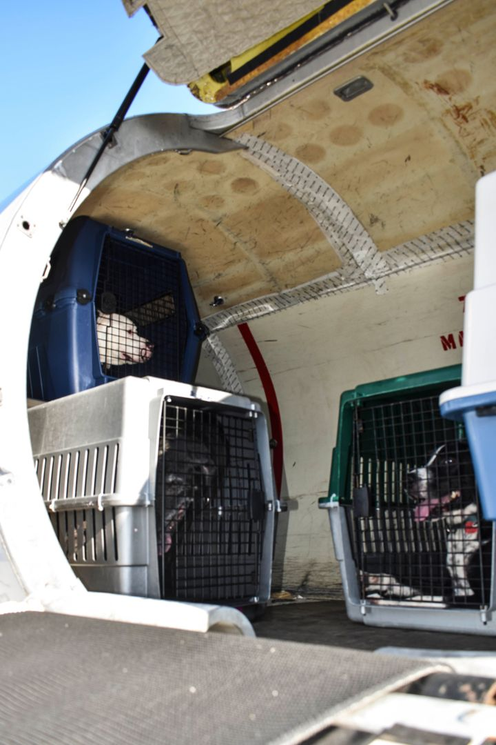 Dogs prepare to fly northeast after being evacuated out of South Florida shelters