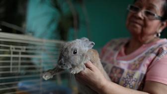 Maria Galindo carries her pet rabbit Lola at her home in Caracas, Venezuela September 14, 2017. REUTERS/Marco Bello