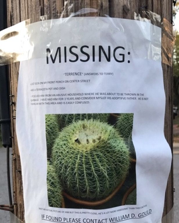 Someone Help This Forlorn Arkansas Man Find His Missing Cactus ...
