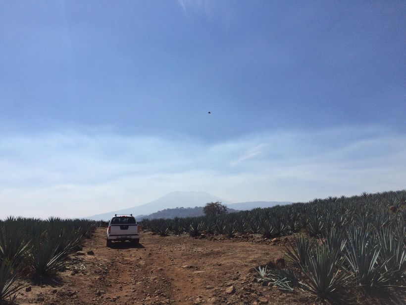 The González agave fields.