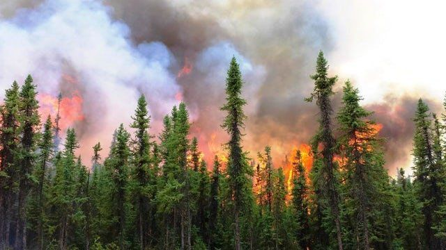In 2015, Alaska's Aggie Creek Fire burned for more than two months, scorched about 12,000 hectares (30,000 acres) and t