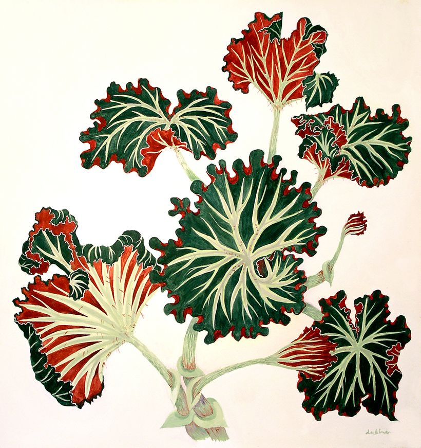 <strong>BEGONIA</strong>