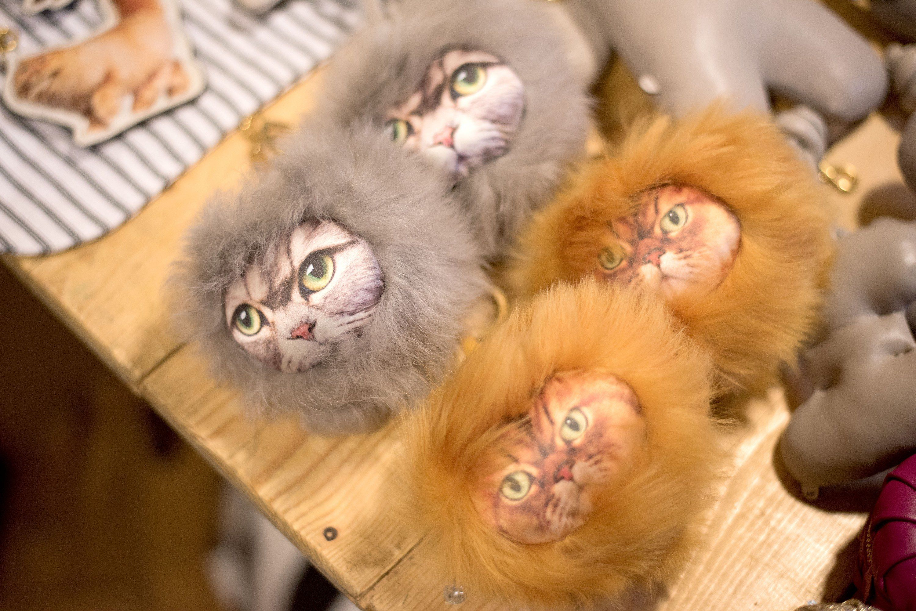 It's Cool To Be A Cat Lady According To London Fashion