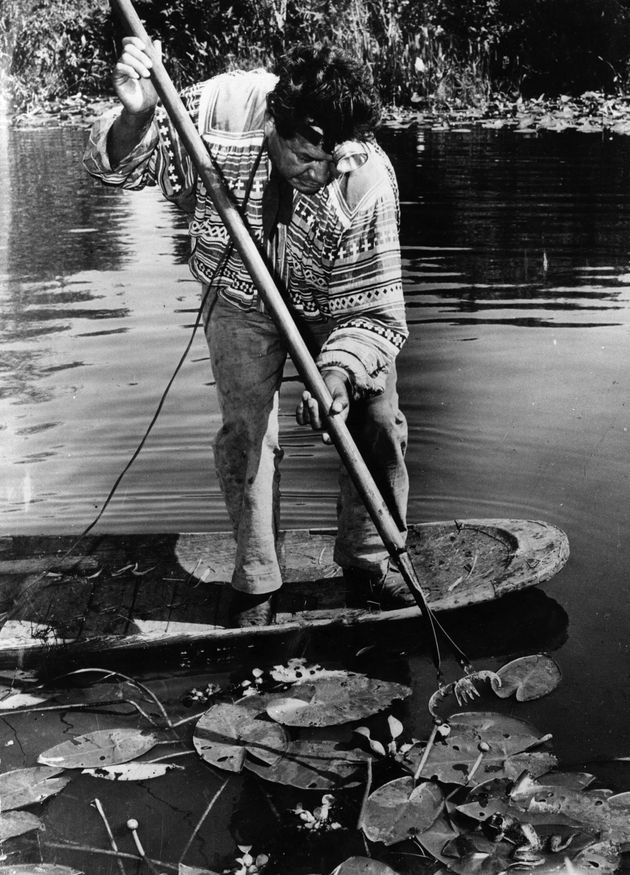 Native American Seminole chief Willie Osoeola balances on a dugout canoe in the 1940s while hunting frogs...