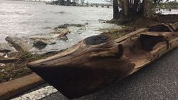 Canoe Found After Hurricane Irma Eyed As Piece Of Florida