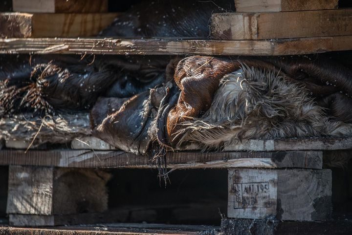 """<p>Cow skins stacked and salted on wooden pallets. Australia, 2017. <a href=""""http://www.weanimals.org/"""" target=""""_blank"""" role=""""link"""" rel=""""nofollow"""" data-ylk=""""subsec:paragraph;itc:0;cpos:__RAPID_INDEX__;pos:__RAPID_SUBINDEX__;elm:context_link"""">Jo-Anne McArthur / We Animals</a></p>"""