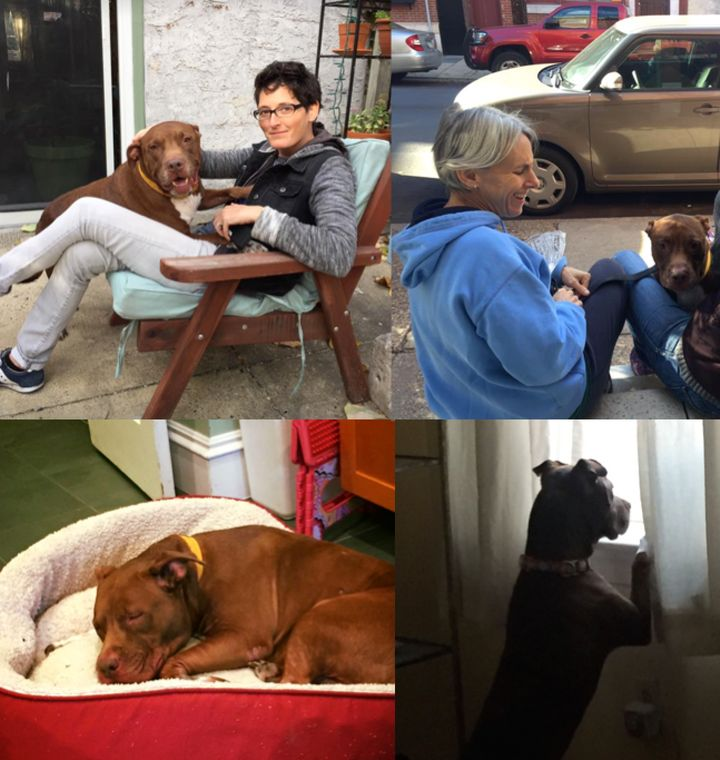 <p>Foster dog #2: Dutch</p>