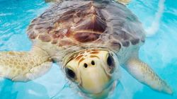 How This Hospital Keeps Sick Turtles Safe During Hurricane
