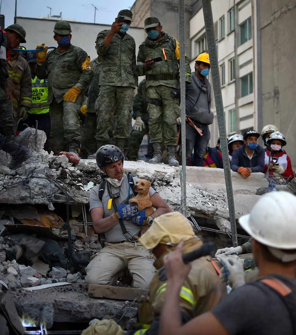 A rescuer pulls a dog out of the rubble during the search for survivors in Mexico City on September 20, 2017.