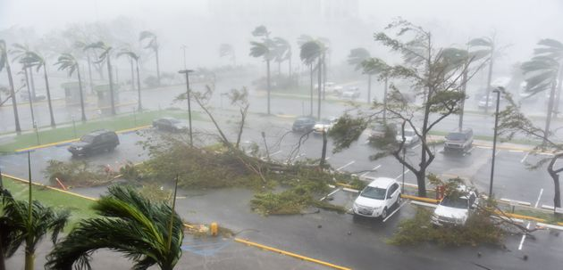 Trees are toppled in a parking lot at Roberto Clemente Coliseum in San Juan, Puerto Rico, on September...