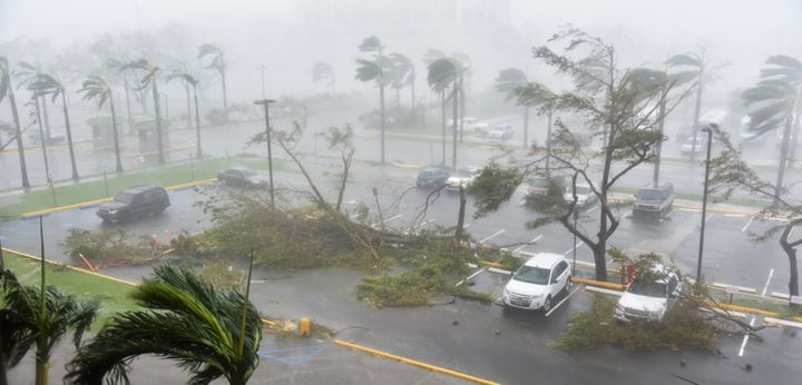 Trees are toppled in a parking lot at Roberto Clemente Coliseum in San Juan, Puerto Rico, on September 20, 2017, during the p