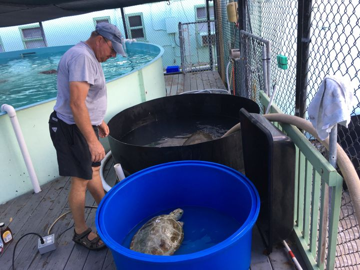 Most of the staff evacuated during Hurricane Irma, but Richie Moretti and Tom Luebke stayed behind to tend to the turtle