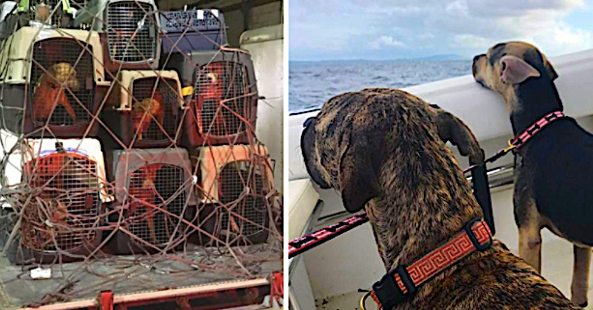 Sali Gear Island Dog Rescue