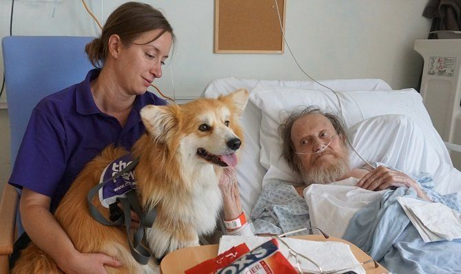 Marcel The Adorable Therapy Dog Brings Joy To People With