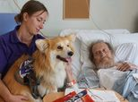Marcel The Adorable Therapy Dog Brings Joy To People With Dementia