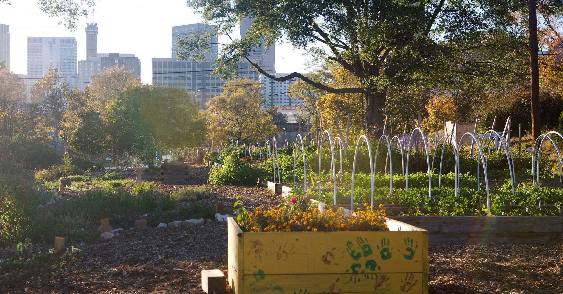 Urban Farming | HuffPost