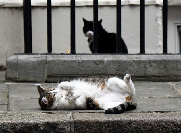 Battersea Launches Search For Its 2017 'Purr Minister' - The Best Cat In