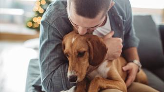 Young man sitting on sofa with his dog. Christmas three in background. Hugging him and kissing.