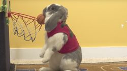 Rabbit Sets World Record For Dunking