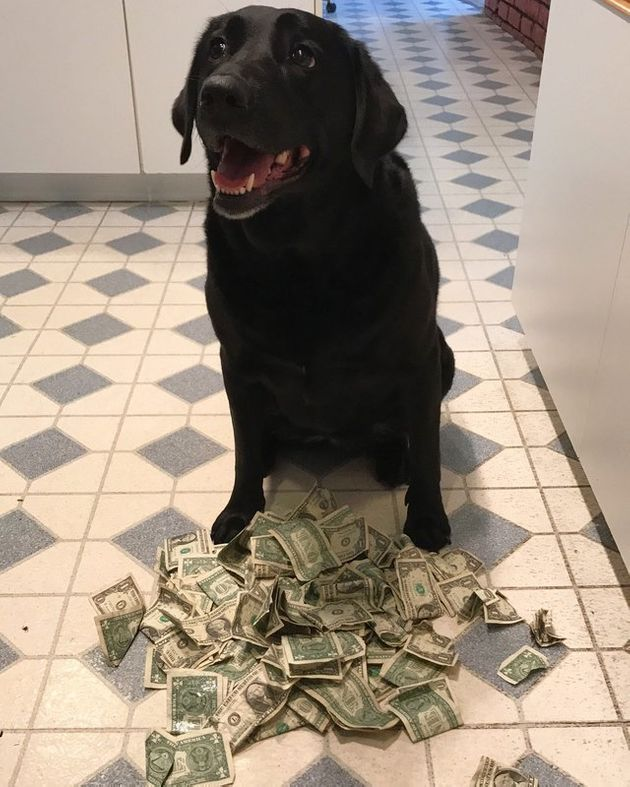 Holly can buy a lot of treats with that