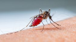 Scientists Worried New 'Super' Strain Of Malaria Could Be