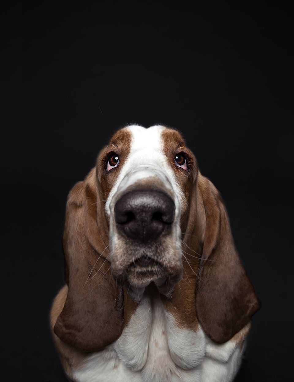 14 ritratti di cani che dimostrano quanto ci