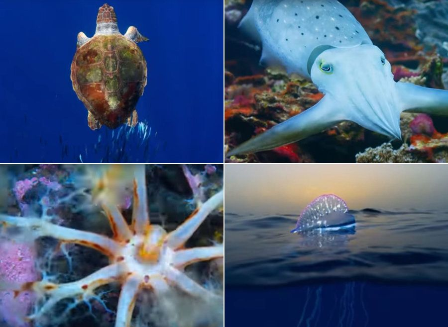 Blue Planet II's First Trailer Features Music From Hans Zimmer And Radiohead, And It Will Completely...