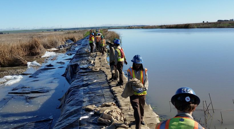 "California Conservation Corps members (Stockton) shoring up the levee on Grizzly Island in Solano County — <a rel=""nofollow"""