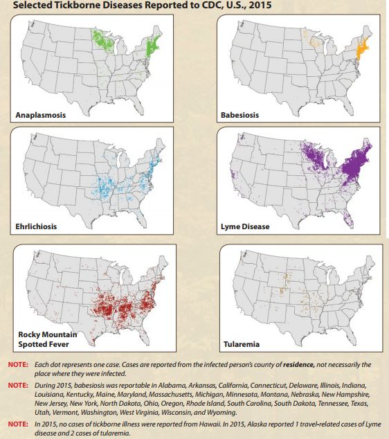 """From <a rel=""""nofollow"""" href=""""https://www.cdc.gov/lyme/resources/tickbornediseases.pdf"""" target=""""_blank"""">the CDC brochure for L"""